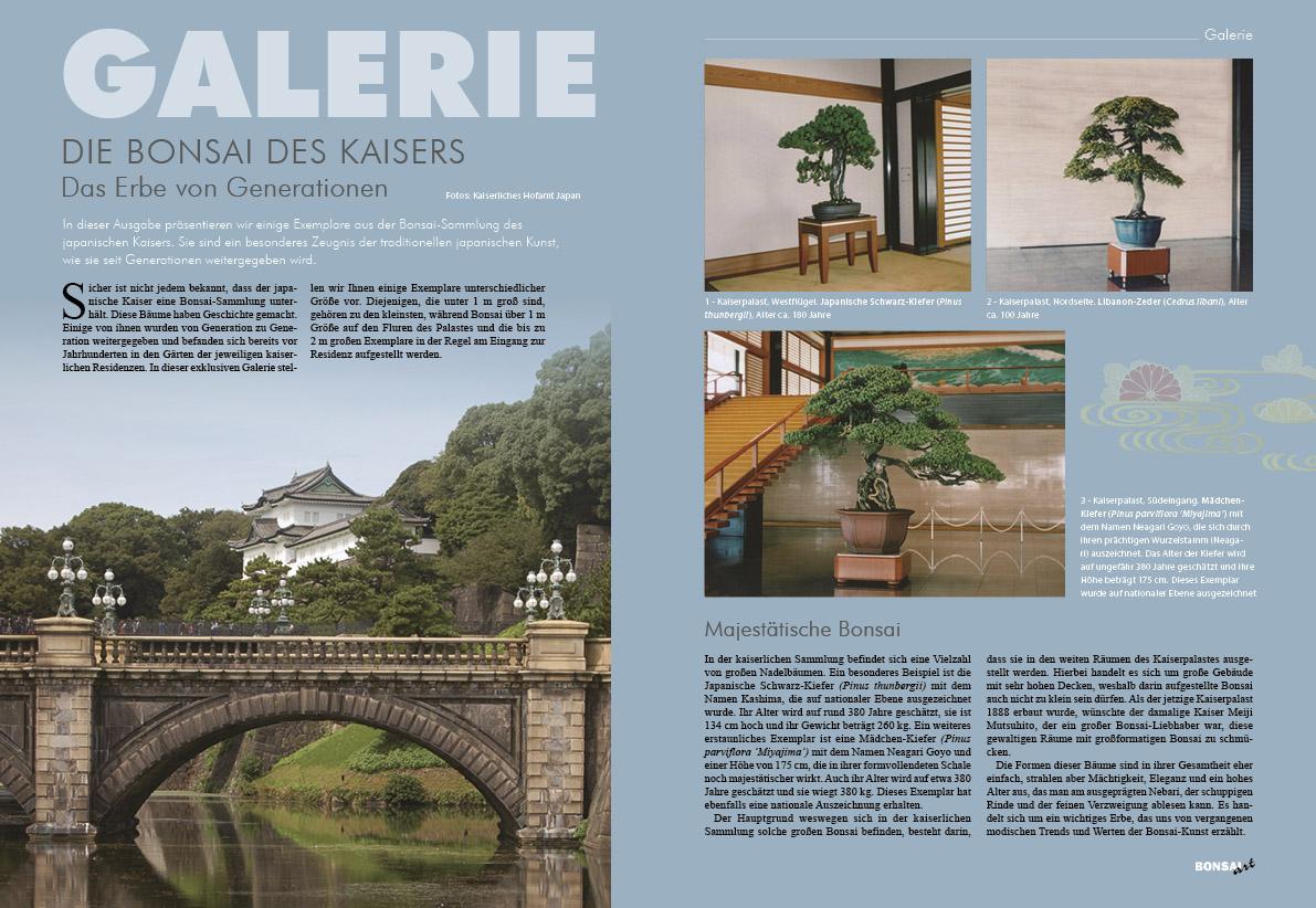 BONSAI ART 150 - Galerie