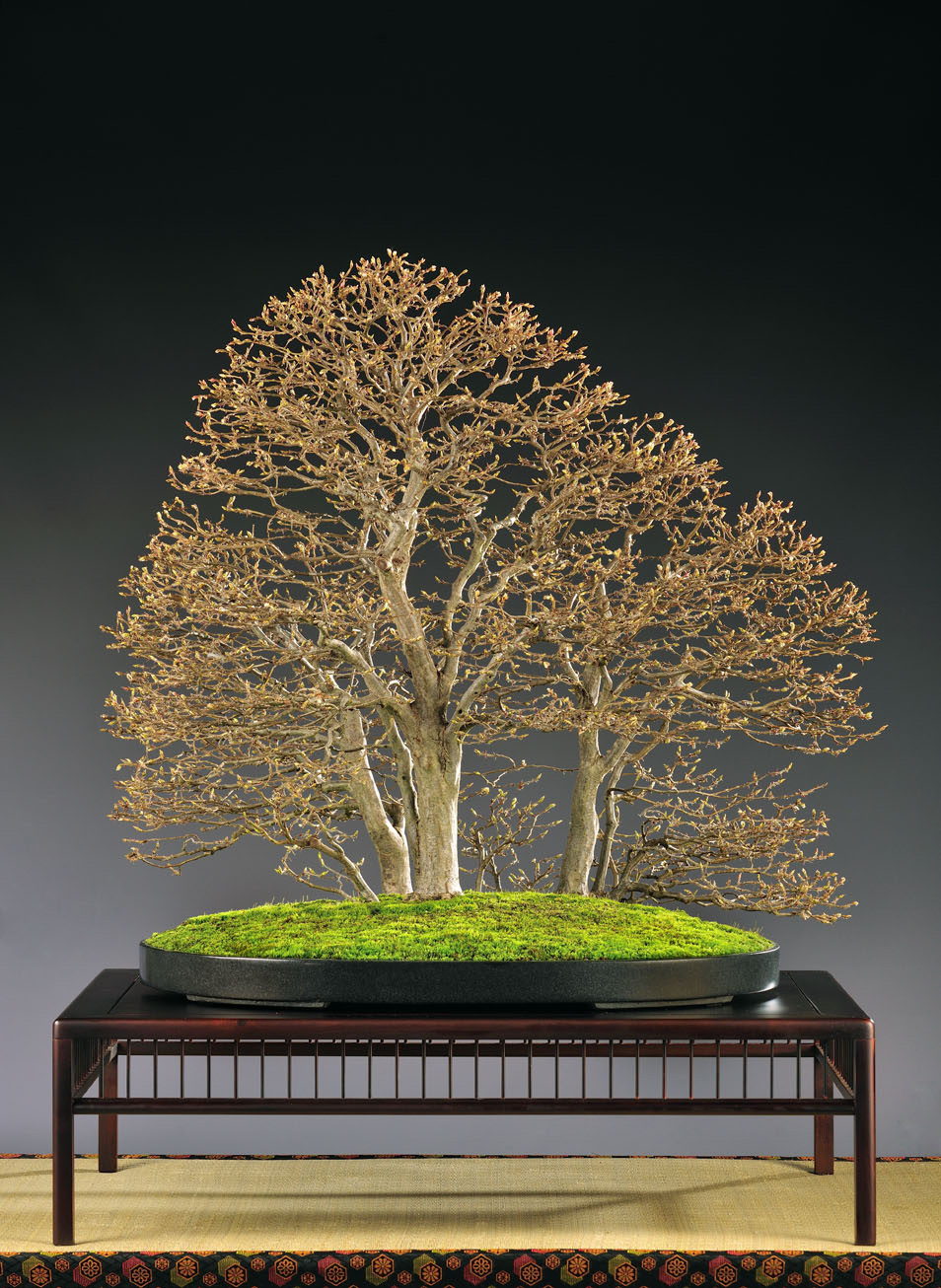 BONSAI ART AWARD 2018 Noelanders Trophy Jürg Stäheli