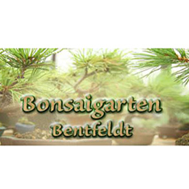 Bonsai Bendfeldt FH