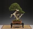 Noelanders Trophy 2011_50