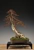 Noelanders Trophy 2011_55