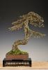 Noelanders Trophy 2011_65
