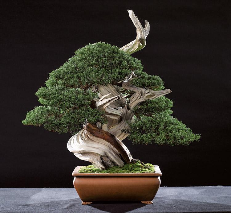 bonsai art 140 jahre bonsai geschichte in frankreich. Black Bedroom Furniture Sets. Home Design Ideas