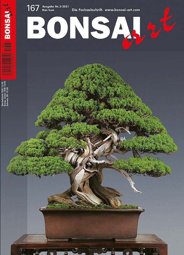 BONSAI ART 167