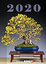 BONSAI ART Kalender 2020