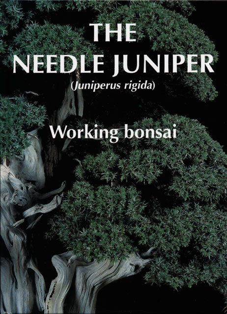The Needle juniper – Working Bonsai