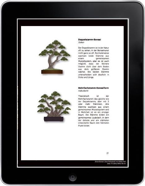 bonsai art bonsai ein leitfaden f r anf nger. Black Bedroom Furniture Sets. Home Design Ideas